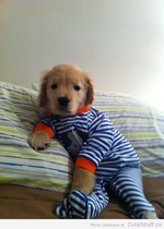 puppy-in-pajamas