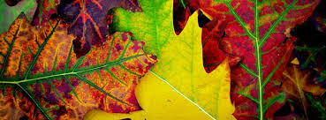 colorful leaves 2