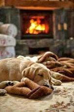 cozy puppy 2