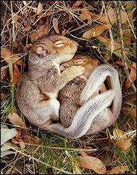 cuddle squirls