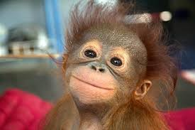 monkey 9