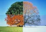 4 part tree