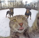 cat selfie 2