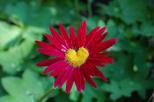 flower pink-yellow heart